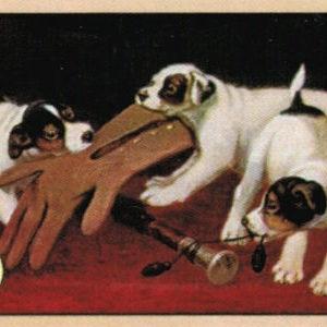 Cartoline Cani