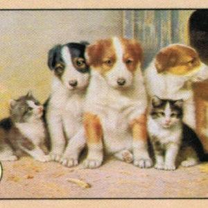 Cartoline Cani e Gatti