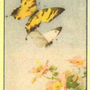 Cartoline Farfalle