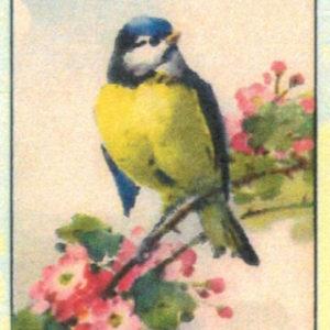 Cartoline Uccelli